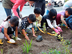 Children planting seedling of wild grass