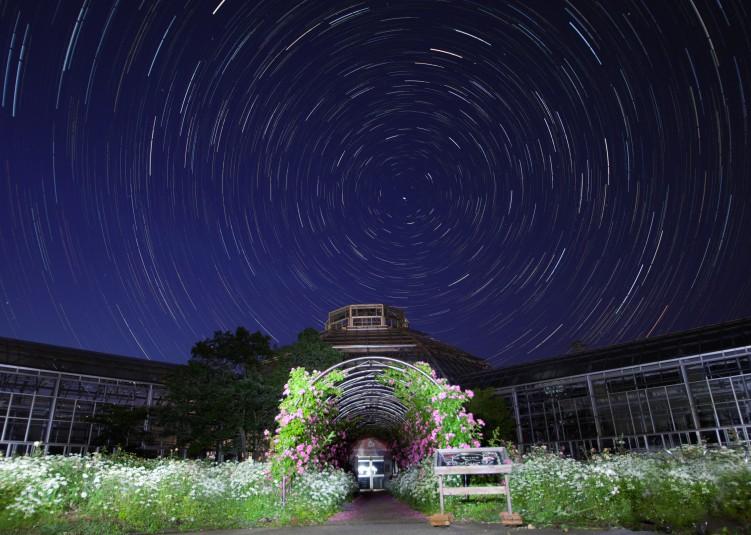 星空とバラ園