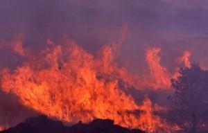 野焼きの炎の画像