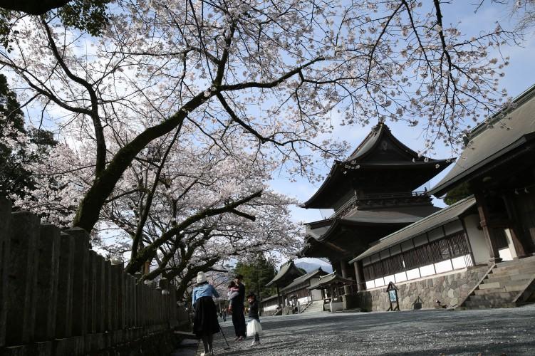 阿蘇神社の楼門と桜(横から)