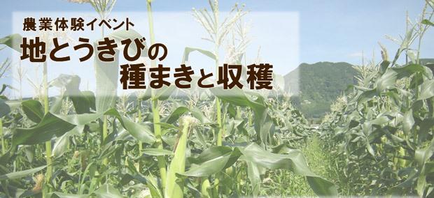 地とうきびの種まきと収穫体験イメージ写真