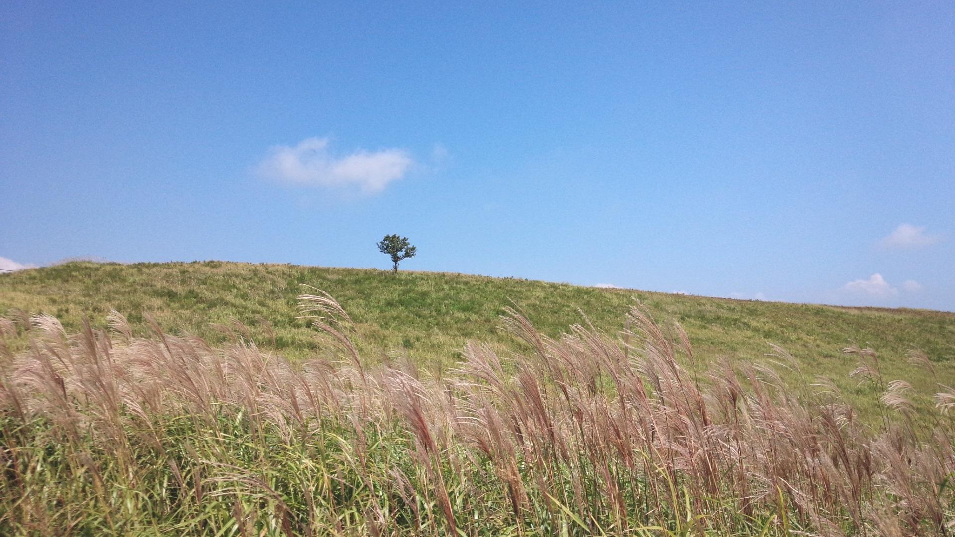 阿蘇の文化的景観 阿蘇北外輪山中央部の草原景観