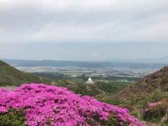 仙酔峡のミヤマキリシマ